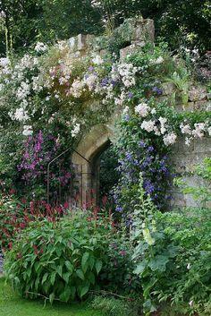 layering, love the secret garden/cottage garden feel Garden Cottage, Lush Garden, Dream Garden, Garden Roses, Garden Plants, Cottage Door, Garden Shrubs, Big Garden, Garden Living