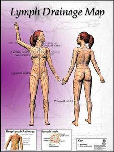 Lymph locations