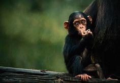 Rain | branch, food, monkey