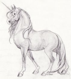 unicorn drawing * unicorn drawing unicorn drawing easy unicorn drawing sketches unicorn drawing easy step by step unicorn drawing easy for kids unicorn drawing cute unicorn drawing fantasy creatures unicorn drawing realistic Unicorn Sketch, Horse Sketch, Unicorn Drawing, Unicorn Art, Drawing Drawing, Drawing Tips, Unicorn Crafts, Drawing Ideas, Pencil Drawings Of Animals