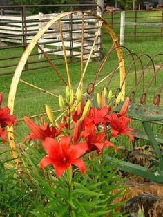 ~ More sweet memories of the Farm ~ love this so much ~ Lily's planted in the old Plow ~♥
