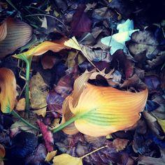 Leaves. - @sir_13- #webstagram