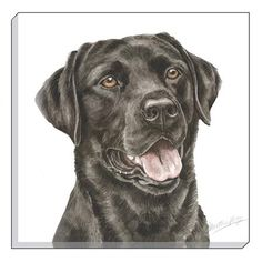 WaggyDogz Black Labrador 40cm Canvas Print Cute Cats And Dogs, Animals And Pets, Labrador Dog Breed, Hunting Drawings, Rock Painting Designs, Dog Paintings, Black Labrador, Elements Of Art, Dog Tattoos