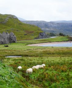 #PinUpLive Scotland: Pubs, Sheep & Crazy Beautiful Landscapes - I'd love to road trip through Scotland!