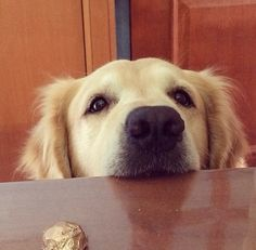 Hey. You gonna eat that? - this is my dog every day - lol