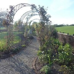 Frühling in Warwickshire. Der Rosenbogenweg lässt die Juni-Blütenpracht jetzt schon erahnen. #gardening