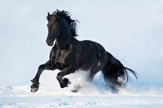 15 породистых лошадей красота, которых радует глаза