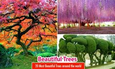 20 Most Beautiful Trees around the world for your inspiration. Read full article: http://webneel.com/beautiful-trees | more http://webneel.com/nature-photography | Follow us www.pinterest.com/webneel