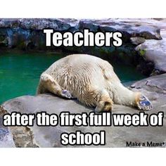 Hahahaha!! So true. Excellent Middle School ELA Curriculum warrinersclassroom.com Click my TpT Store Tab!