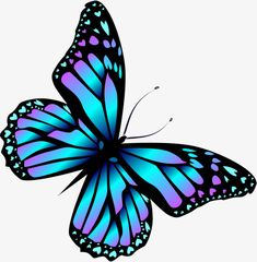 Butterfly Clip Art, Butterfly Tattoo Designs, Butterfly Painting, Butterfly Wallpaper, Blue Butterfly Tattoo, Colorful Butterfly Drawing, Realistic Butterfly Tattoo, Simple Butterfly, Butterfly Images