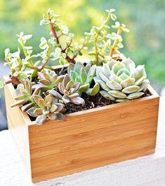IKEA hack: 5 items die je ook als plantenbak kunt gebruiken - Roomed | roomed.nl