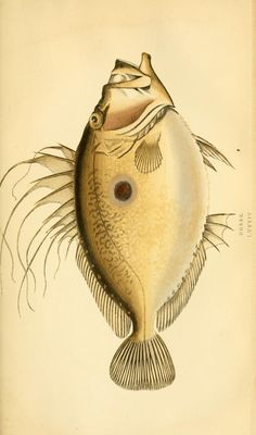 v. 2 - A history of the fishes of the British Islands. - Biodiversity Heritage Library