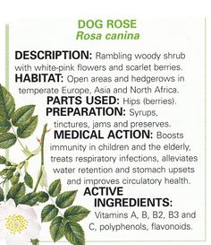 Dog Rose Herb #Medicine #TrustInHim