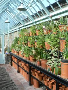 A tiered bench is a perfect way to show off a plant collection or give real impact in a monopitch greenhouse.