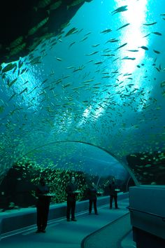 How about this view for a grand entrance?? http://www.georgiaaquarium.org/book-your-event/