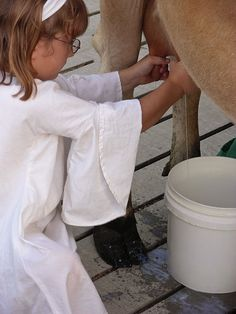 Girl in white milking a cow by hand into a plastic pail near Mankato, Minnesota.