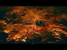 鍋島藩ゆかりの15万坪の庭園にて、毎年10万人が訪れる秋恒例のイベント「紅葉まつり」を開催中。「紅葉ライトアップ」の規模は【日本最大級】※リクルートライフスタイル調べ – おもしろ・おどろき・気になるニュース