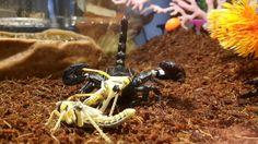 . Scorpion, Food, Collection, Meal, Scorpio, Essen, Hoods, Meals, Eten