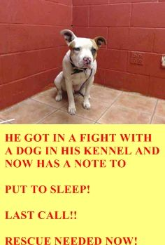 PLEDGES AND RESCUE NEEDED! A4807797 I don't have a name yet and I'm an approximately 1 year, 6 month old male pit bull. I am not yet neutered. I have been at the Downey Animal Care Center since March 12, 2015. I am available on March 16, 2015. You can visit me at my temporary home at D618. https://www.facebook.com/photo.php?fbid=837305093016491&set=pb.100002110236304.-2207520000.1426898085.&type=3&theater