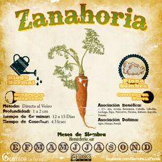 Eco Garden, Garden Deco, Home Vegetable Garden, Edible Garden, Garden Plants, Growing Greens, Growing Herbs, Organic Gardening, Gardening Tips