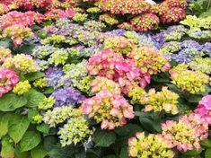 especial dia de la madre en Agralia del Principado Plants, Garden Centre, Plant, Planets