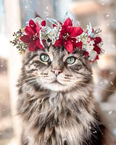 These cute kittens will brighten your day. Cats are wonderful companions. Pretty Cats, Beautiful Cats, Animals Beautiful, Cute Baby Animals, Animals And Pets, Funny Animals, Cute Kittens, Cat Wallpaper, Animal Wallpaper