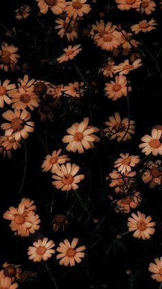 10801920 Chamomile flowers bloom as wallpaper 10801920 Chamomile flowers bloom as . - 10801920 chamomile flowers bloom as wallpaper 10801920 chamomile flowers bloom as wallpaper, # - Tumblr Wallpaper, Flor Iphone Wallpaper, Iphone Background Wallpaper, Cellphone Wallpaper, Nature Wallpaper, Amazing Wallpaper, Wallpaper Wallpapers, Wallpaper Ideas, Iphone Homescreen Wallpaper