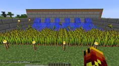 Wheat Farm (57)