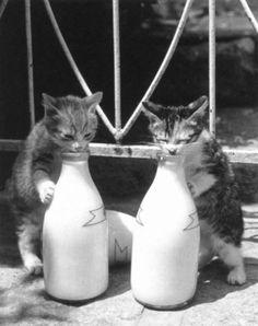 kitties drinking milk from bottles