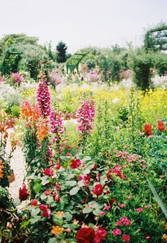 Colorful Wild Garden