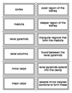 Flash Cards covering the Endocrine System for Honors Anatomy. There are 58 cards. These can be used in conjunction with the Endocrine System crossword and quiz/worksheet. Nursing School Scholarships, Online Nursing Schools, Nursing Students, Lpn Schools, Nursing Degree, Nursing Career, Nursing Uniforms, Lpn Nursing, Nursing Assistant