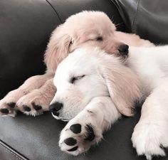Briard Hund Hunde Hunderasse Pfote Schlüsselanhänger Schlüsselband Lanyard