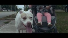 Breed Specific Legislation (BSL) - A controversial law that bans certain types of dogs