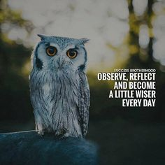 Observe reflect ad become a little wiser..