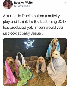 A kennel in Dublin recreated the nativity scene with dogs. Would you just look at the baby Jesus? Enjoy RUSHWORLD boards, LULU'S FUNHOUSE, UNPREDICTABLE WOMEN HAUTE COUTURE and HELLO CUPCAKE. Follow RUSHWORLD! We're on the hunt for everything you'll love!