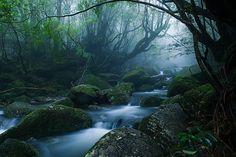 Mononoke forest, Yakushima island