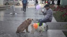 """Anybody who loves dogs needs to see this uplifting video.  Stray dogs also need love and attention. That's the message two Chilean college students, Violeta Caro Pinda and Felipe Carrasco Guzman, wanted to get across to the residents of Santiago, a city that is home to hundreds of thousands of street dogs. In this sweet, poetic video, """"I Am Here,"""" volunteers tie balloons to the dogs with messages written on them,  with heartening results. (They removed the balloons after making the video.)"""