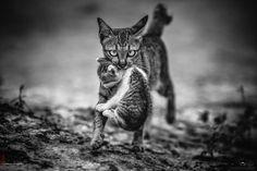 11 settembre 2016 – foto di Suriyathepjuti Tinanop | Canon Club Italia