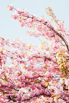 Springtime Cherry Blossom Paris | Image by Katie Mitchell Photography