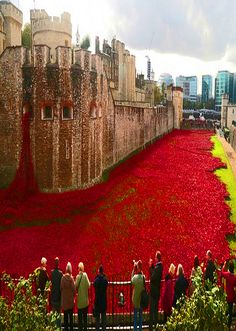 Red Poppies all around the moat at the Tower of London. The poppies are part of a ceramic poppy installation called 'Blood Swept Lands and Seas of Red' which marks the centenary of the outbreak of the...