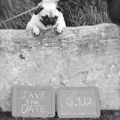 Pug and love :)