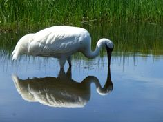 International Crane Foundation (Baraboo, WI): Hours, Address, Nature & Wildlife Area Reviews - TripAdvisor