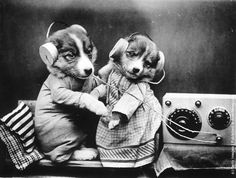 vintage everyday: Funny Vintage Animal Photos