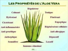 Outre les 200 éléments nutritifs essentiels qu'il contient, l'Aloe Vera… Forever Living Aloe Vera, Forever Aloe, Aloe Vera Uses, Natural Aloe Vera, Natural Kitchen, Forever Living Products, Natural Home Remedies, Healer, Health And Nutrition