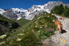 Bellissima escursione in valle Anzasca da Pecetto a Belvedere, rifugio Zamboni e lago delle Locce Locce. Adatta a tutti