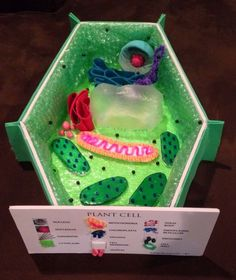 Plant cell 3D model for 7th grade science class. Got an A!: