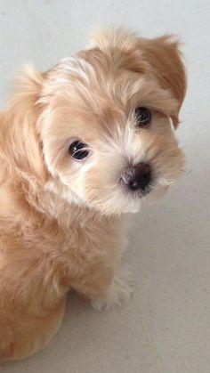 Super Cute Puppies, Baby Animals Super Cute, Cute Baby Dogs, Cute Little Puppies, Cute Dogs And Puppies, Baby Puppies, Cute Little Animals, Cute Funny Animals, Doggies