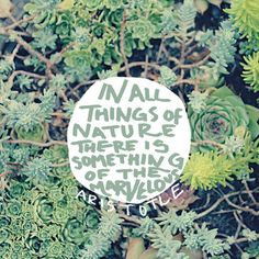 Aristotle: Nature  by Leah Flores