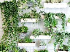 plante suspendue plante tombante et suspension macram v g tal pinterest jardins. Black Bedroom Furniture Sets. Home Design Ideas