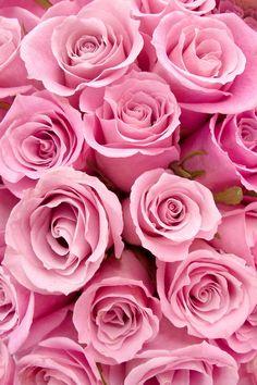 ✿⊱♥ A delicadeza das rosas